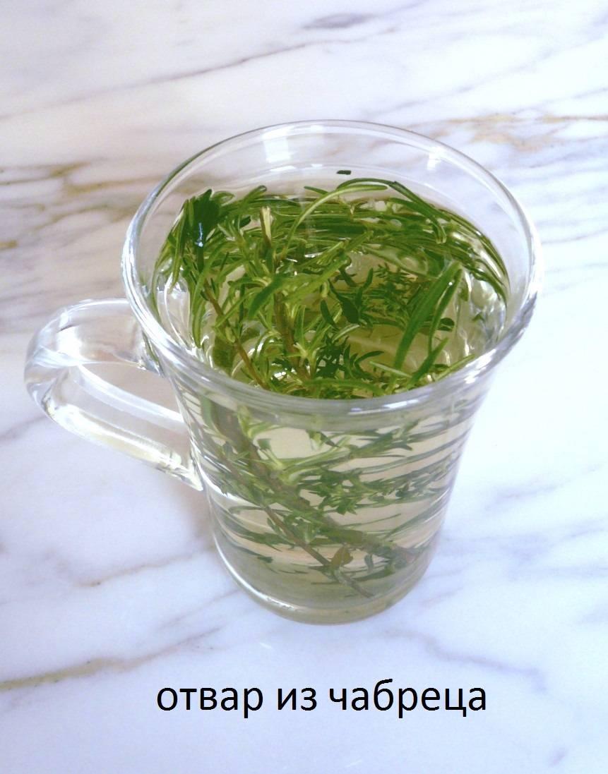 Чабрец - лечебные свойства и противопоказания, рецепты приготовления отваров, настоек и чаев