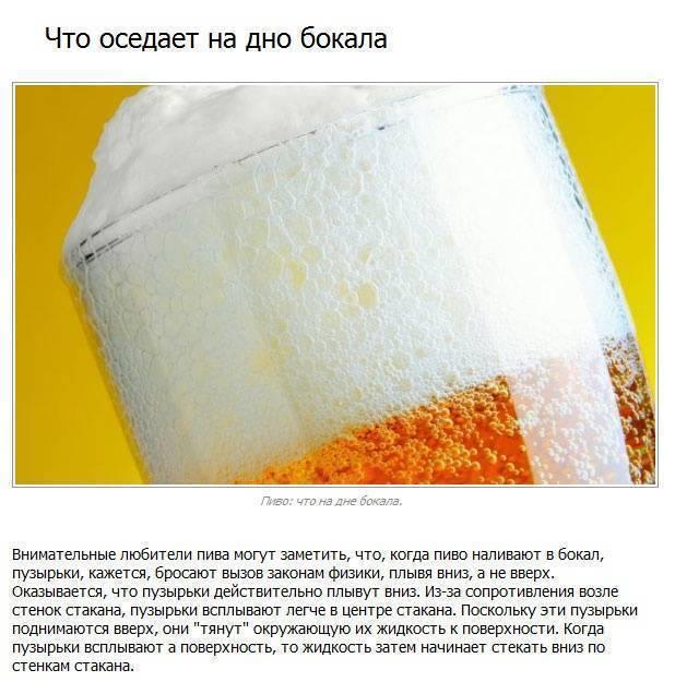 Малоизвестные факты о пиве | fresher - лучшее из рунета за день