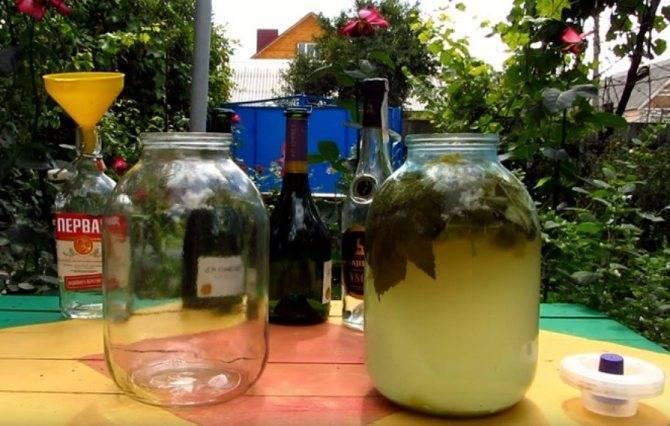 ✅ шампанское из виноградных листьев в домашних условиях: простой рецепт - tehnoyug.com