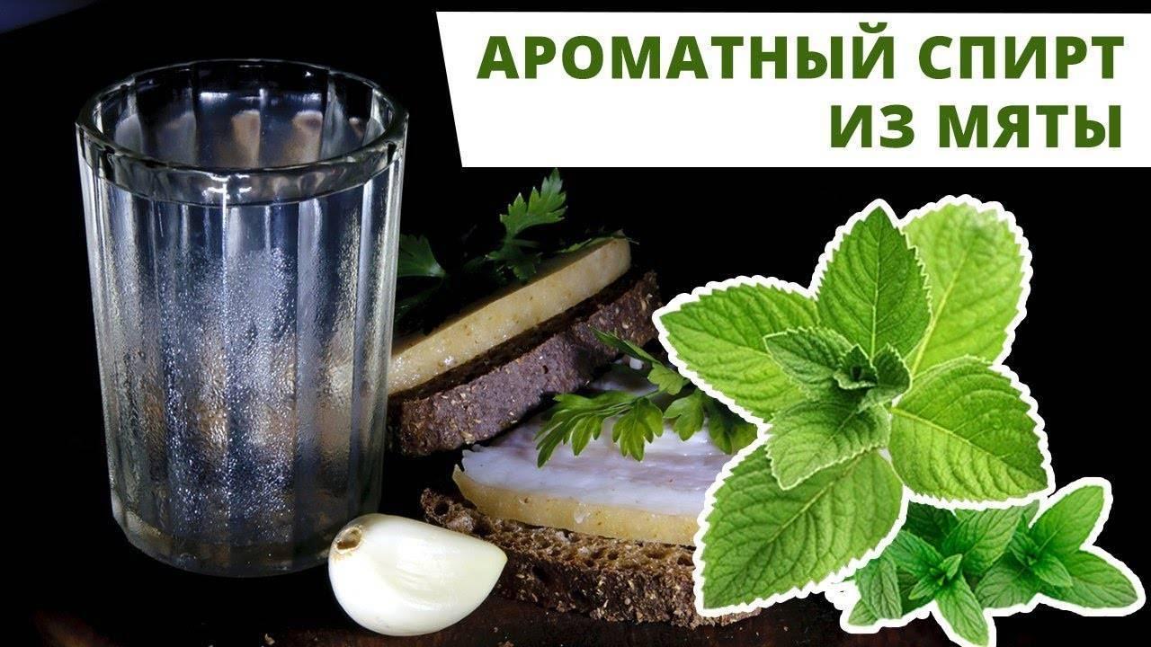 Мятная настойка: рецепты на спирту, водке и самогоне. мятная настойка- незаслуженно забытая