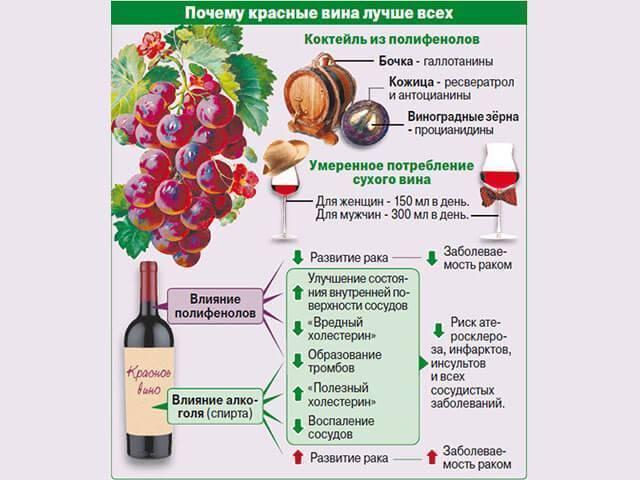 Шампанское: польза и вред, химический состав, правила употребления, противопоказания