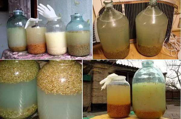 Хлебная водка, рецепт браги на диких дрожжах пшеницы – кулинарный рецепт