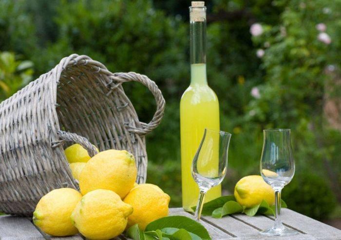 Вино из лимонника в домашних условиях простой рецепт. приготовление вина из лимона   зелёный сад