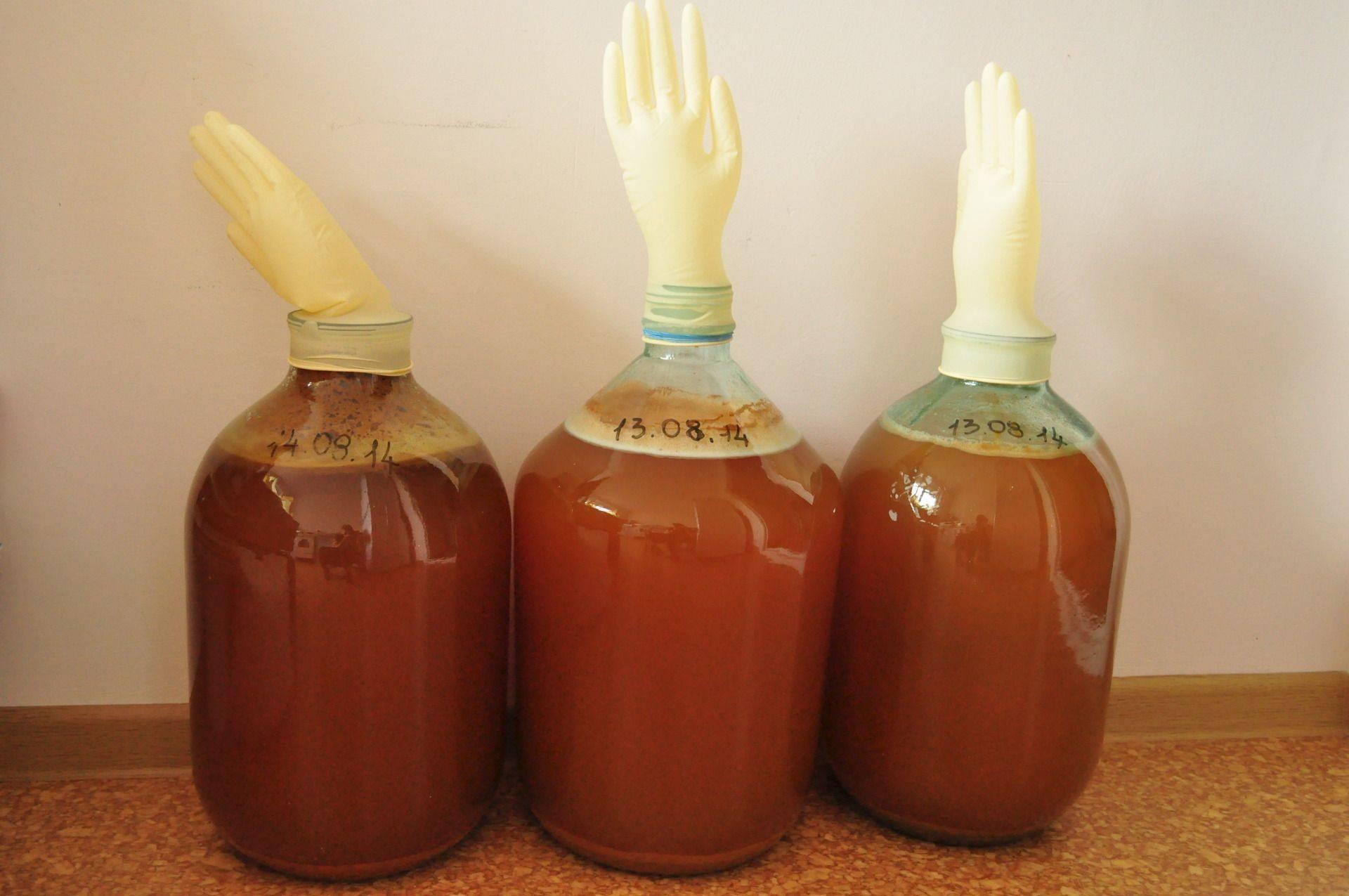 Вино из яблок в домашних условиях: простые и оригинальные рецепты домашнего вина из яблок – фото и видео