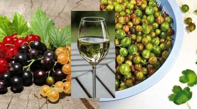 Как сделать вино из крыжовника в домашних условиях: рецепт классический, с водкой и на закваске