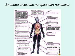 Влияние алкоголя на иммунную систему человека