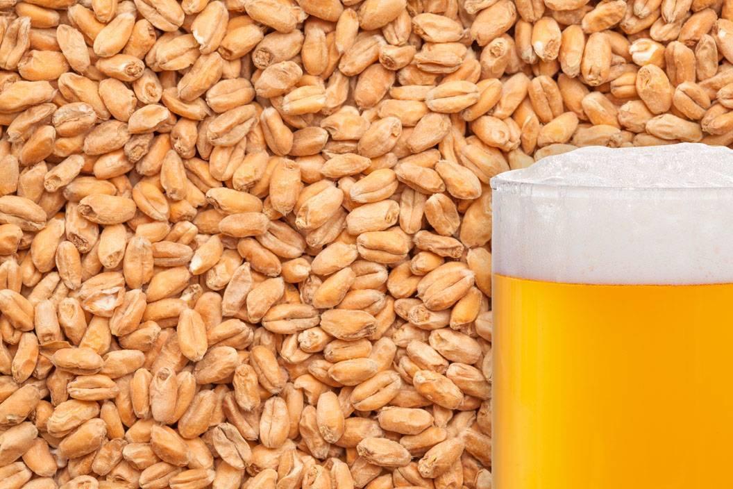 Солод - что это такое, польза и противопоказания, рецепты изготовления для хлеба, пива или виски с фото