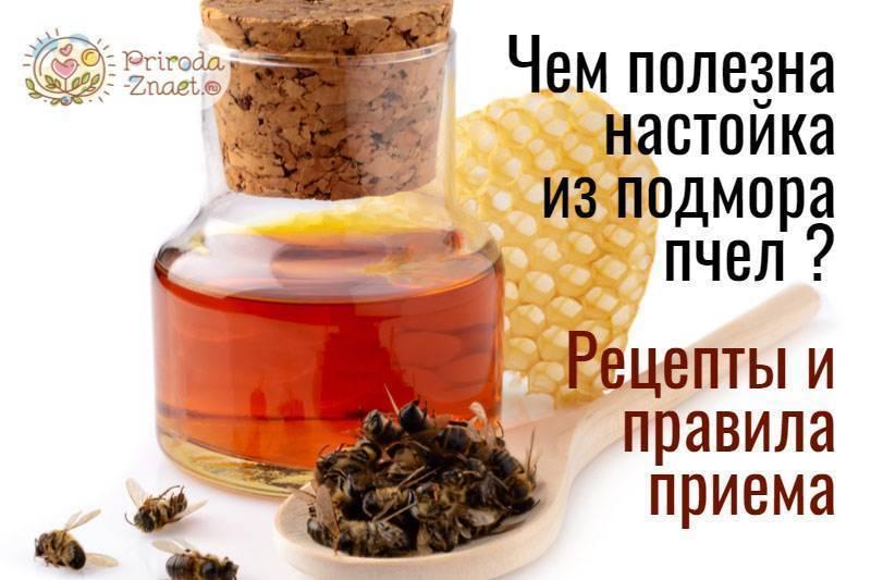 Пчелиный подмор настойка на спирту рецепт и применение