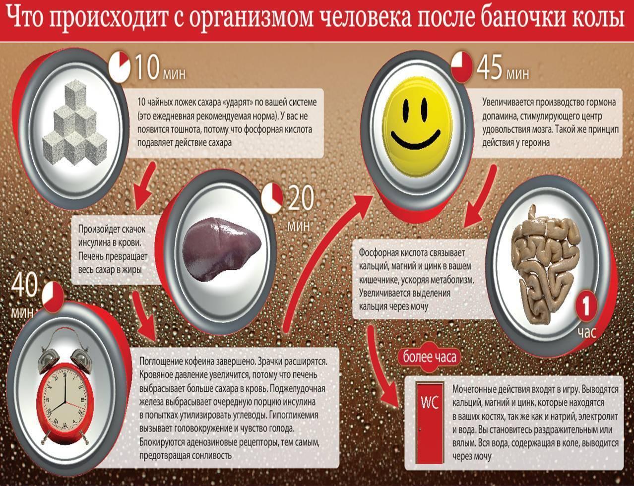 Химия опьянения ипохмелья. что происходит соспиртным после того, как оно выпито — нож