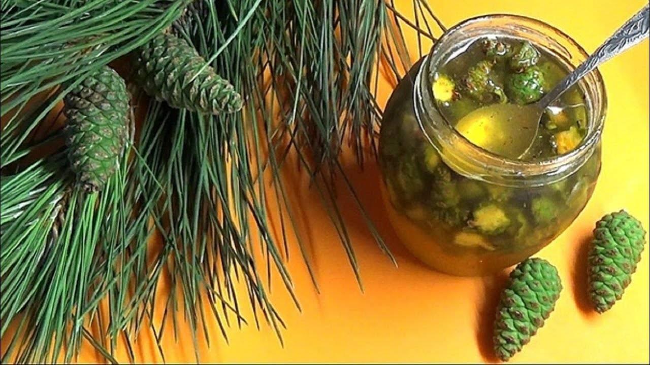 Настойка из кедровых шишек на водке применение от каких болезней