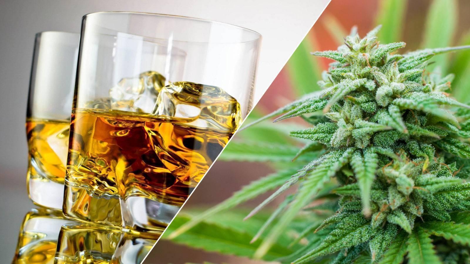 «алкоголь – яд, а не продукт питания». профессор разрушил мифы о спиртном