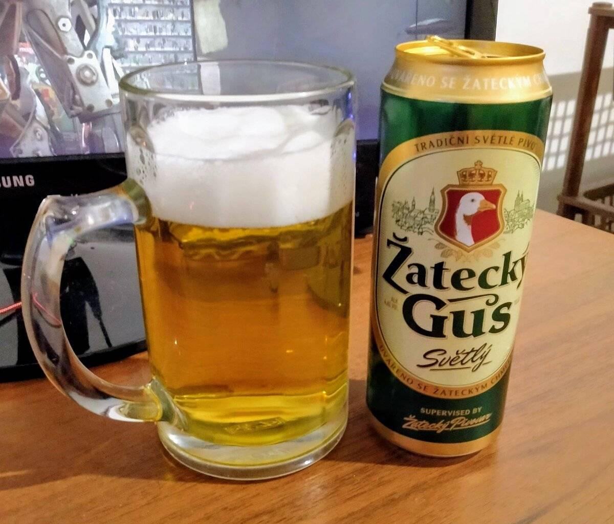 Пиво žatecký gus («жатецкий гусь»): описание пива и его особенности употребления (125 фото и видео)