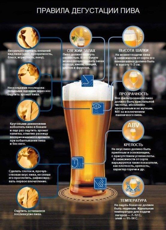 Пивной напиток: в чем отличие от пива? ⛳️ алко профи