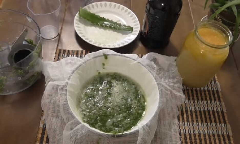 Настойка из алоэ с мёдом и кагором: рецепт, применение в народной медицине