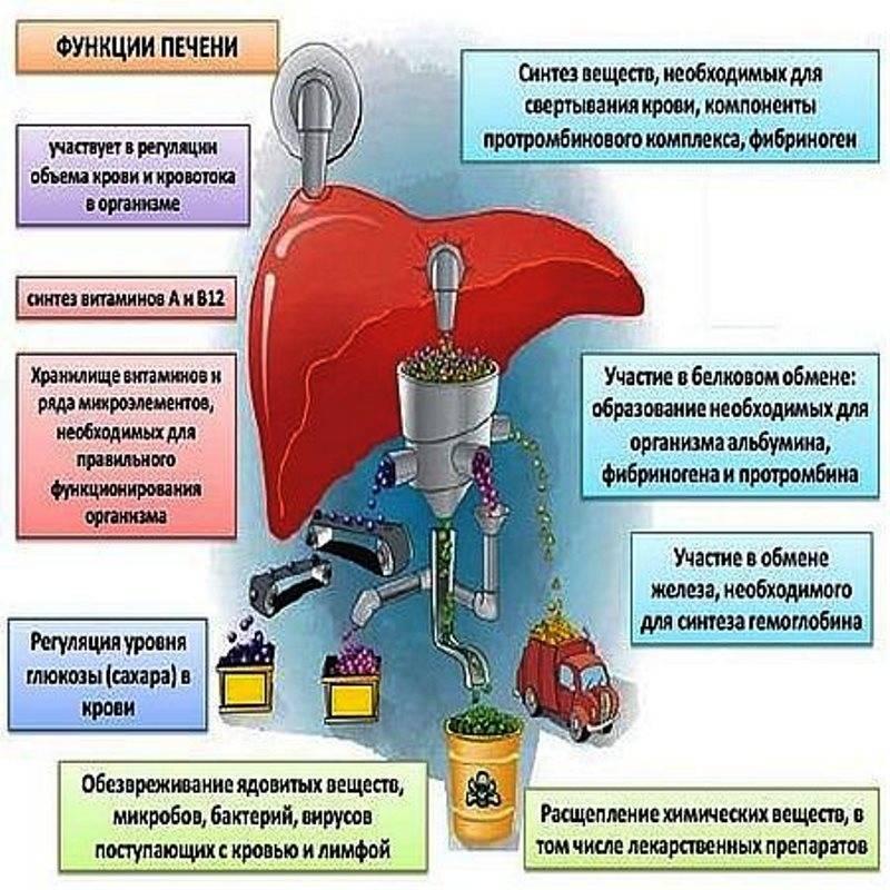 Методы детоксикации: экстренная помощь организму при отравлениях