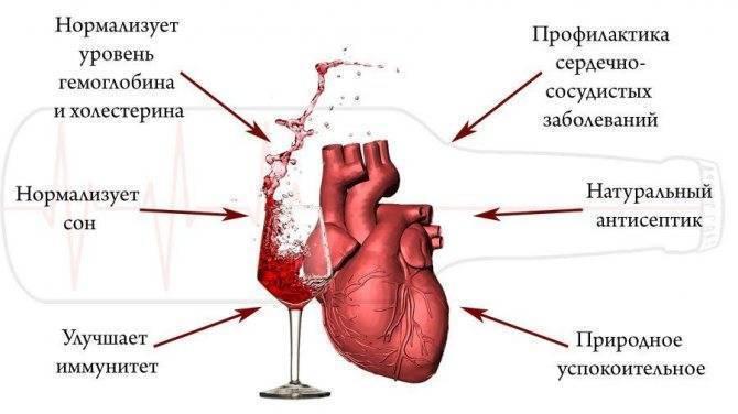 Влияние алкоголя на сердечно-сосудистую систему человека