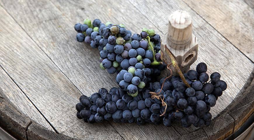 Сорта винограда - как подобрать лучший?