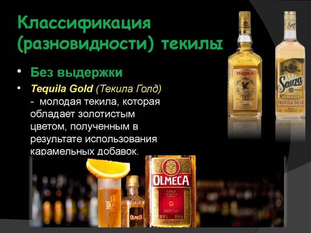 Справочник текиловеда: виды текилы, известные бренды, как пьют — vyshen.ru — онлайн журнал