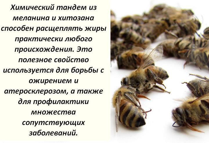 Подмор пчелиный: настойка на спирту - рецепт в домашних условиях, как приготовить настой из мертвых пчел на водке, а также способ применения при лечении