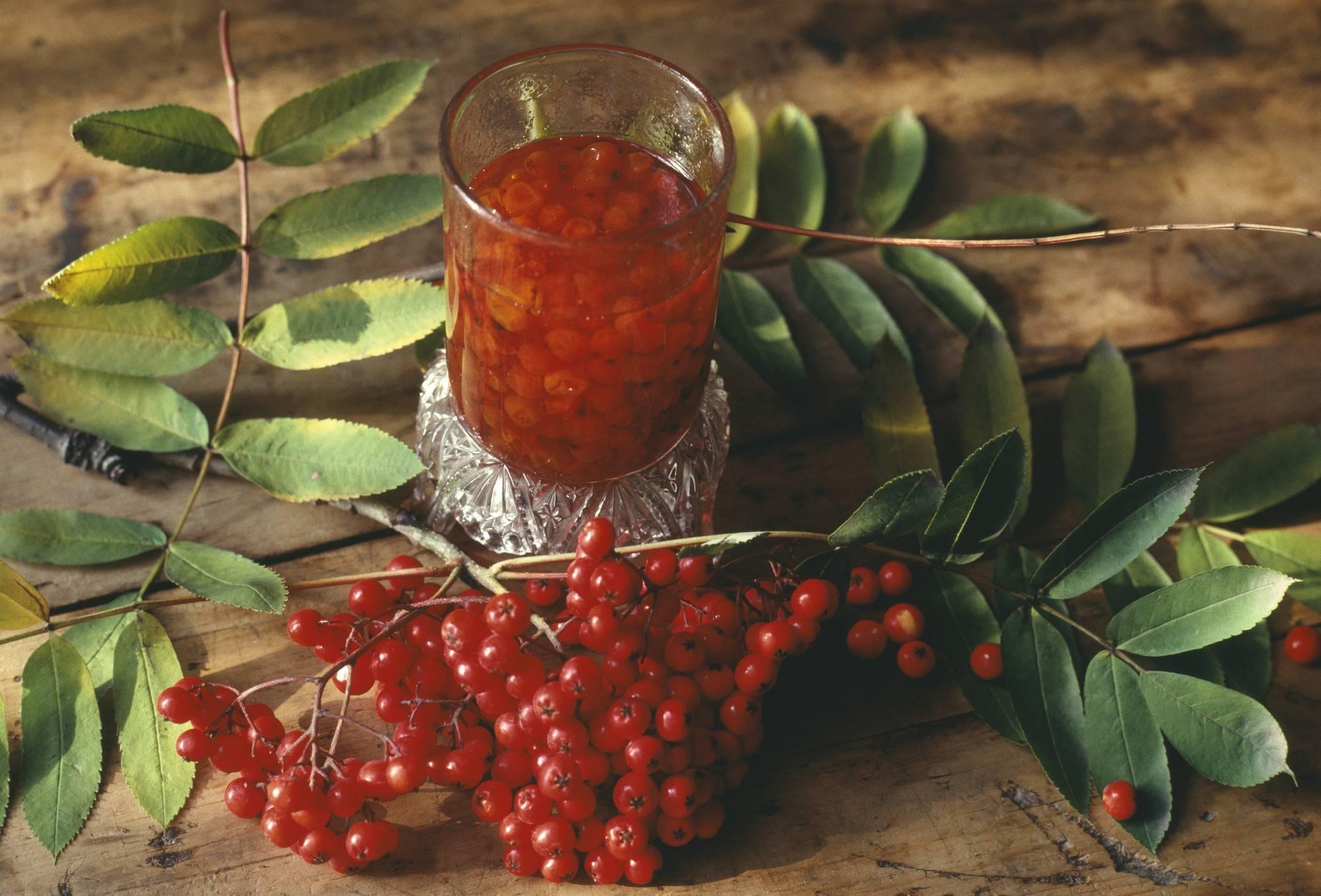 Настойка из красной рябины в домашних условиях на водке, самогоне, спирту, коньяке – рецепт. чем полезна красная рябина? свойства, польза красной рябины