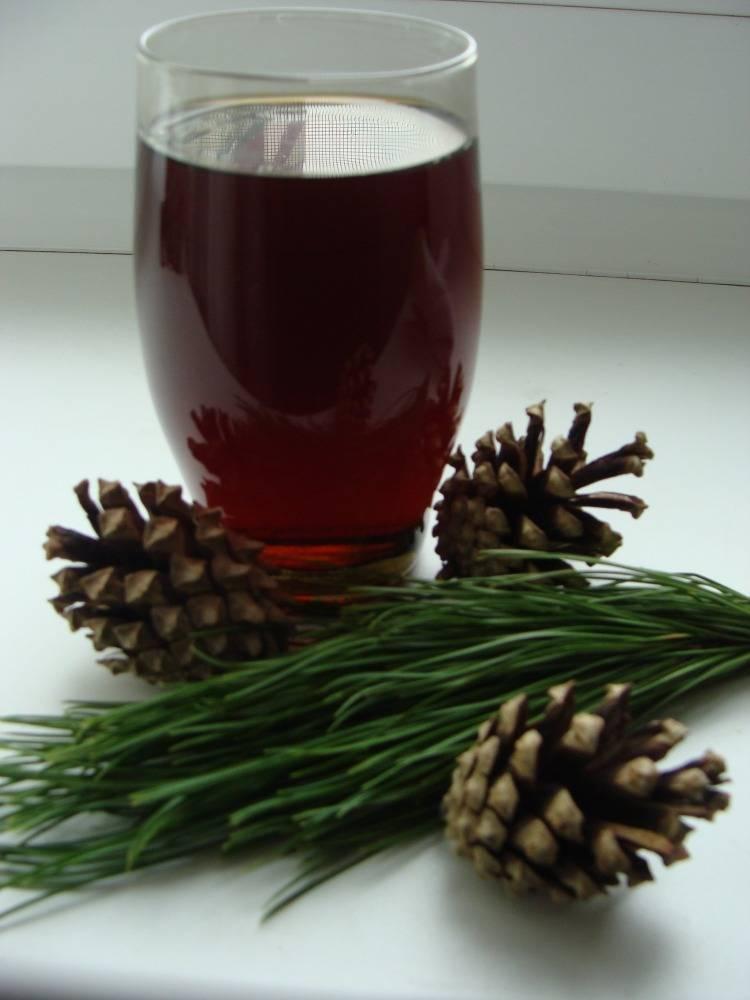 Лечебные свойства настойки из сосновых шишек