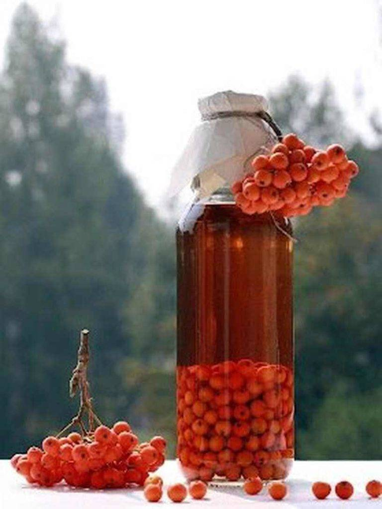 Настойка из красной рябины на водке: рецепт в домашних условиях, как сделать своими руками
