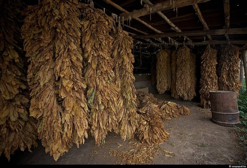 Заметки о правильном хранение табака и сигар - частные заметки