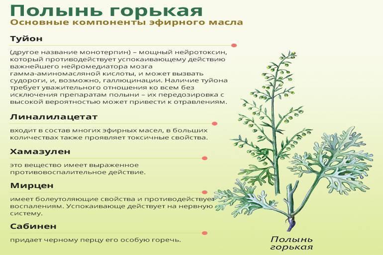 Настойка полыни: показания и рецепты для здоровья