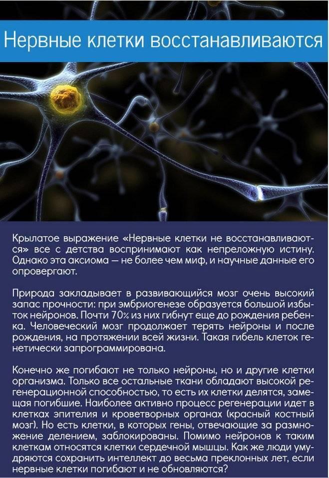 Нервные клетки восстанавливаются: правда или вымысел?