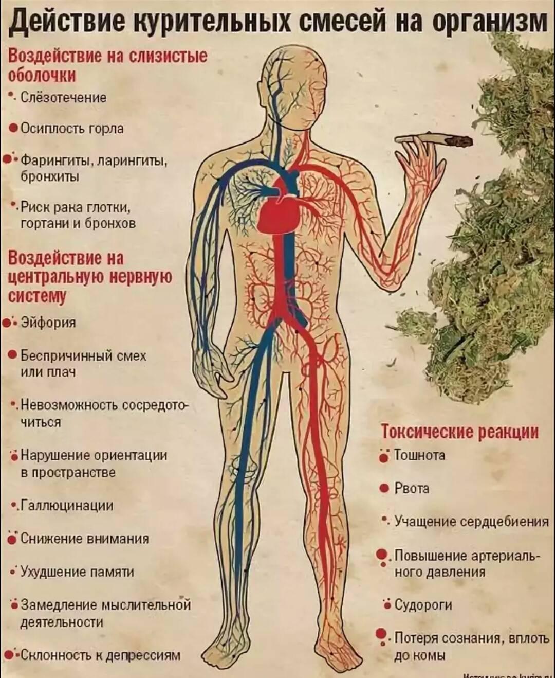 Сколько держатся наркотики в крови и моче