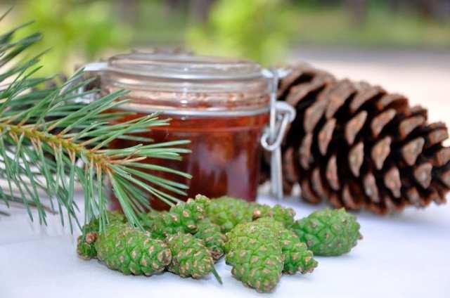 Сосновые шишки - настойка на водке, лечебные свойства