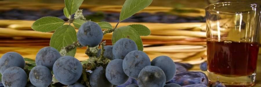 Домашнее вино из терна рецепты - простые пошаговые рецепты с фотографиями