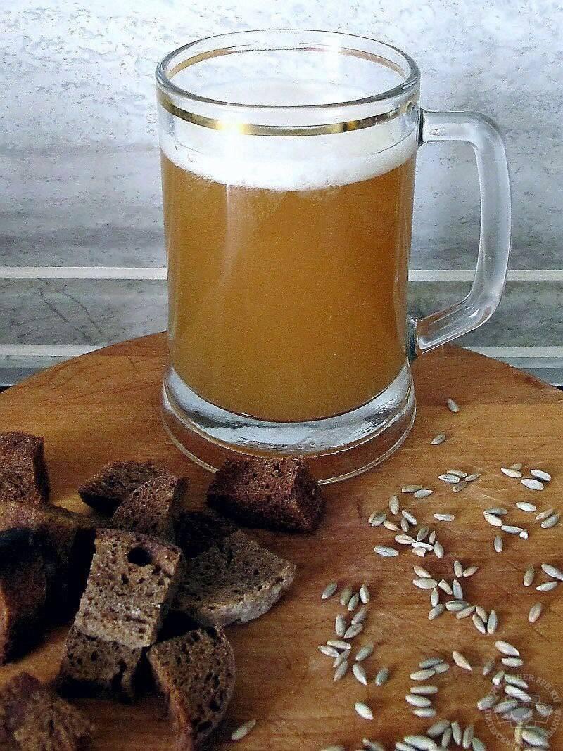 Квас из солода: рецепт в домашних условиях, как приготовить качественный солод для вкусного кваса