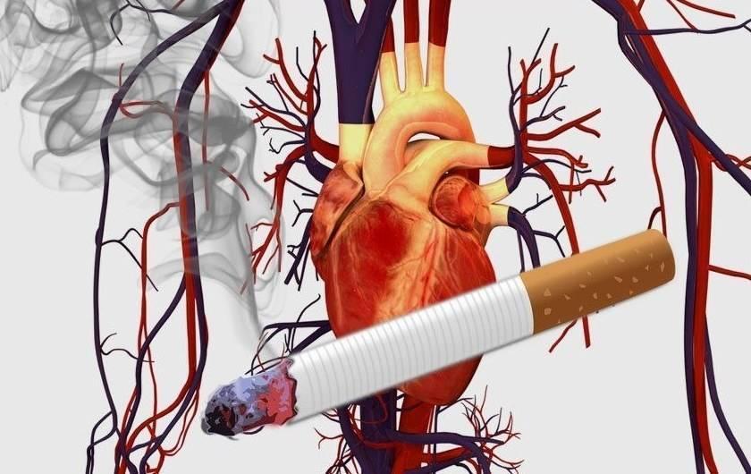 Влияние курения на кровеносные сосуды, заболевания, опасности