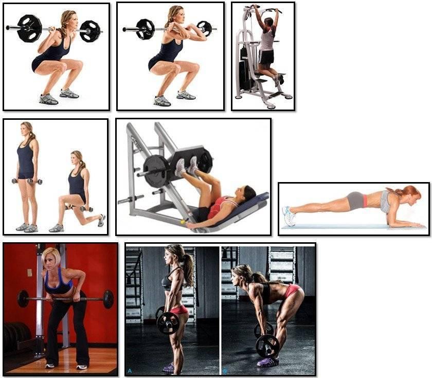 Программка тренировки в зале для похудения для женщин и мужчин