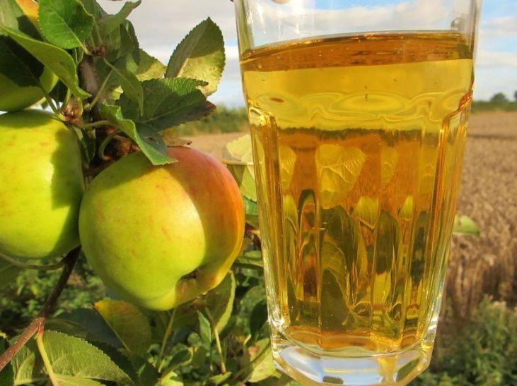 Яблочный сидр: приготовление в домашних условиях