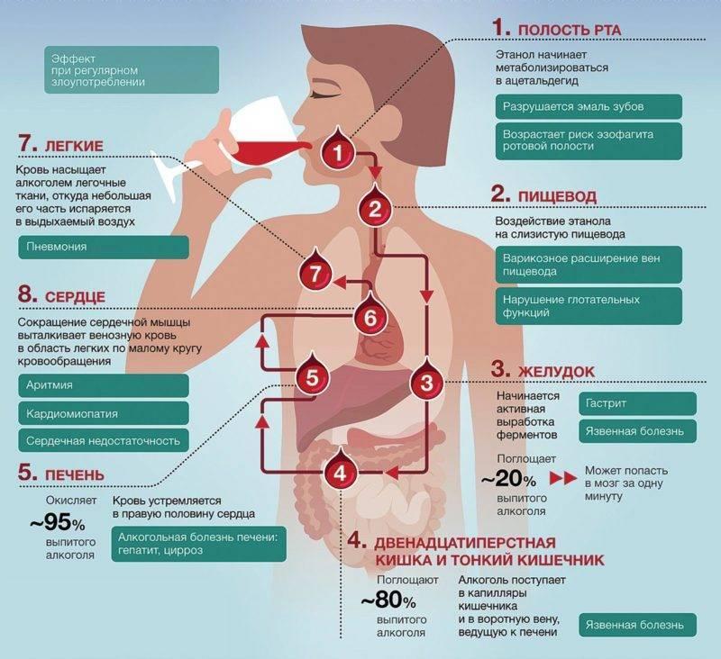Каково влияние алкоголя на организм человека и последствия его потребления