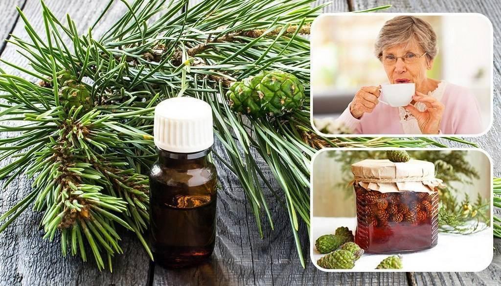 Как пить настойку из сосновых шишек