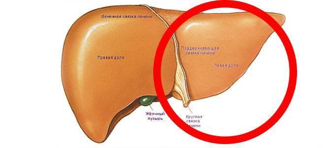 Увеличена печень на 3 см: какой прогноз, причины и лечение