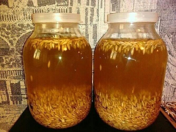 Готовим квас из солода в домашних условиях подбор зерновой основы и лучшие рецепты