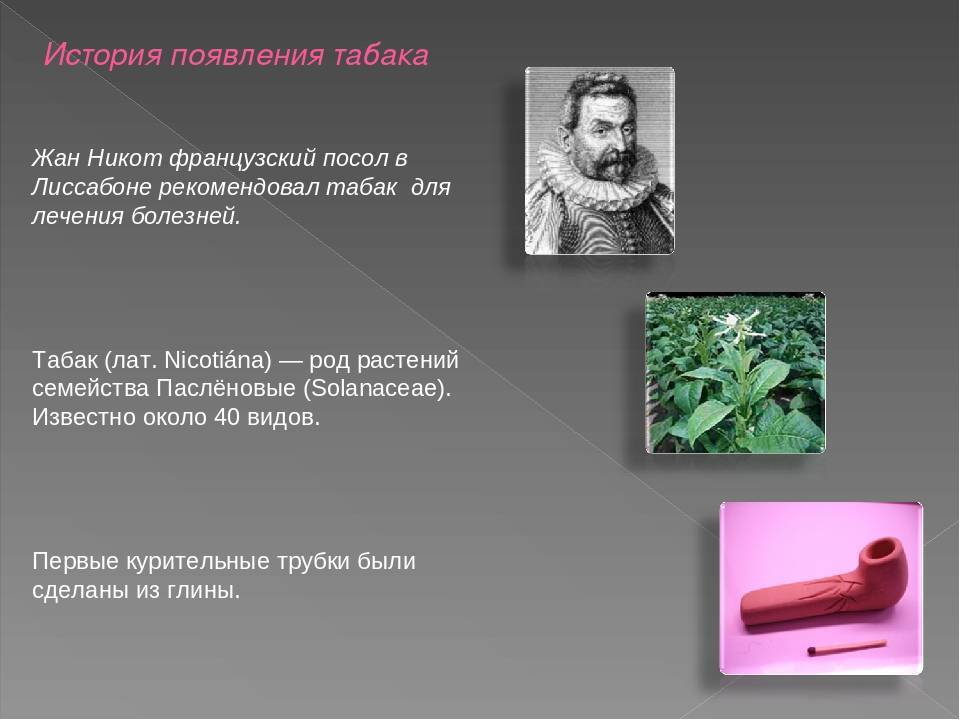 История табака: происхождение, распространение в мире, различные факты