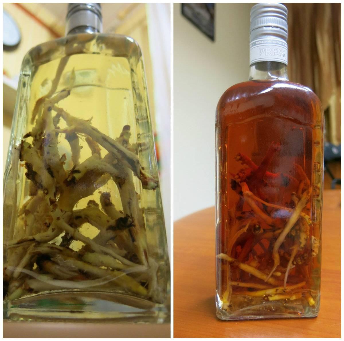 Лечебные свойства и противопоказания корня калгана, применение для мужчин, настойка калгана