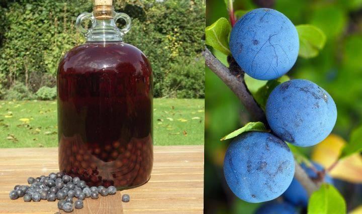 Домашнее вино из терна, настойка, наливка – рецепты как сделать