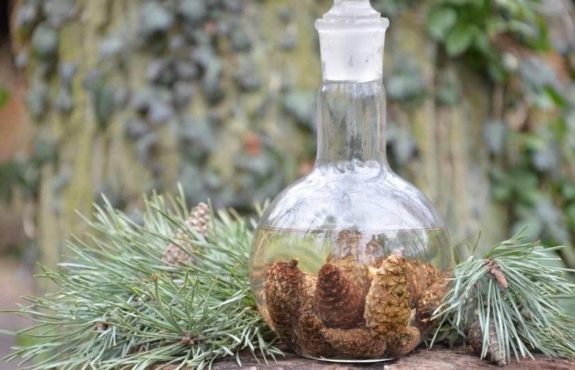 Настойка из сосновых шишек на водке: применение, польза и вред, противопоказания, рецепты