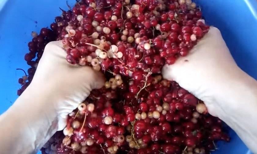 Варианты вин изготавливаемых из красной смородины на дому