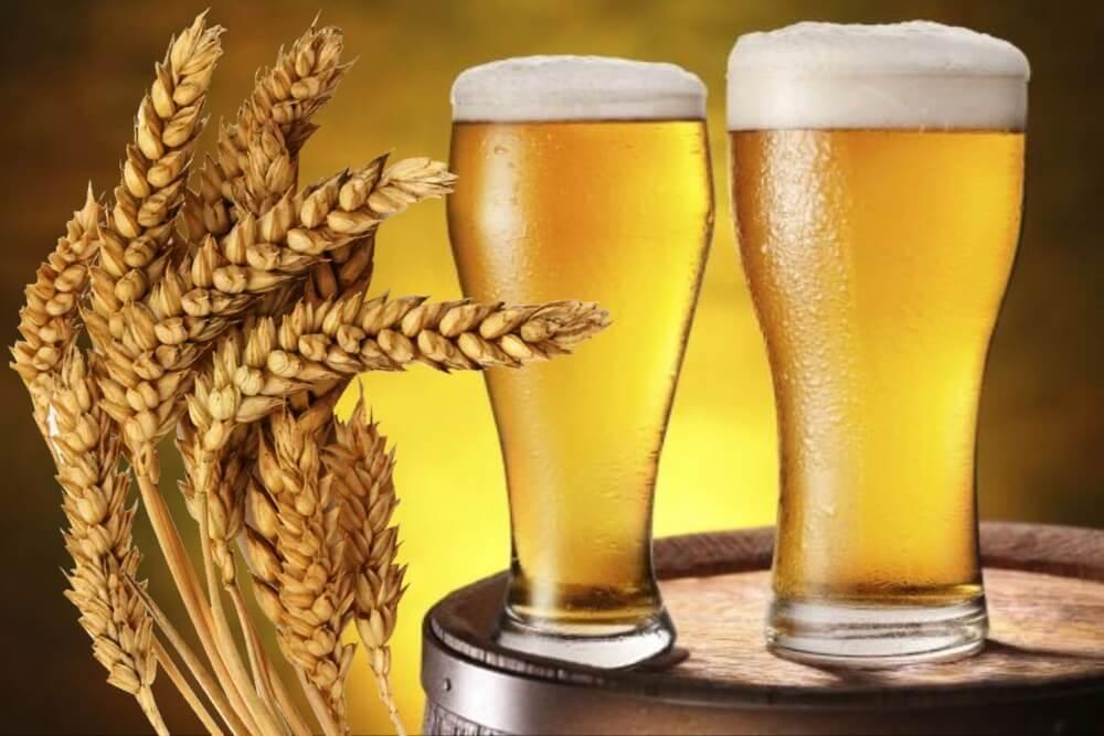 Эволюция india pale lager — pivo.by