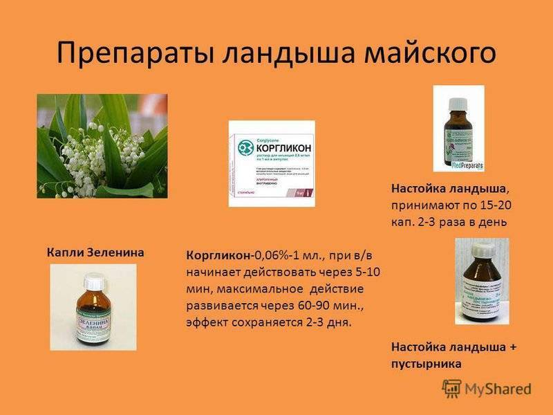Ландыш лечебные свойства и противопоказания рецепты - saenta.ru