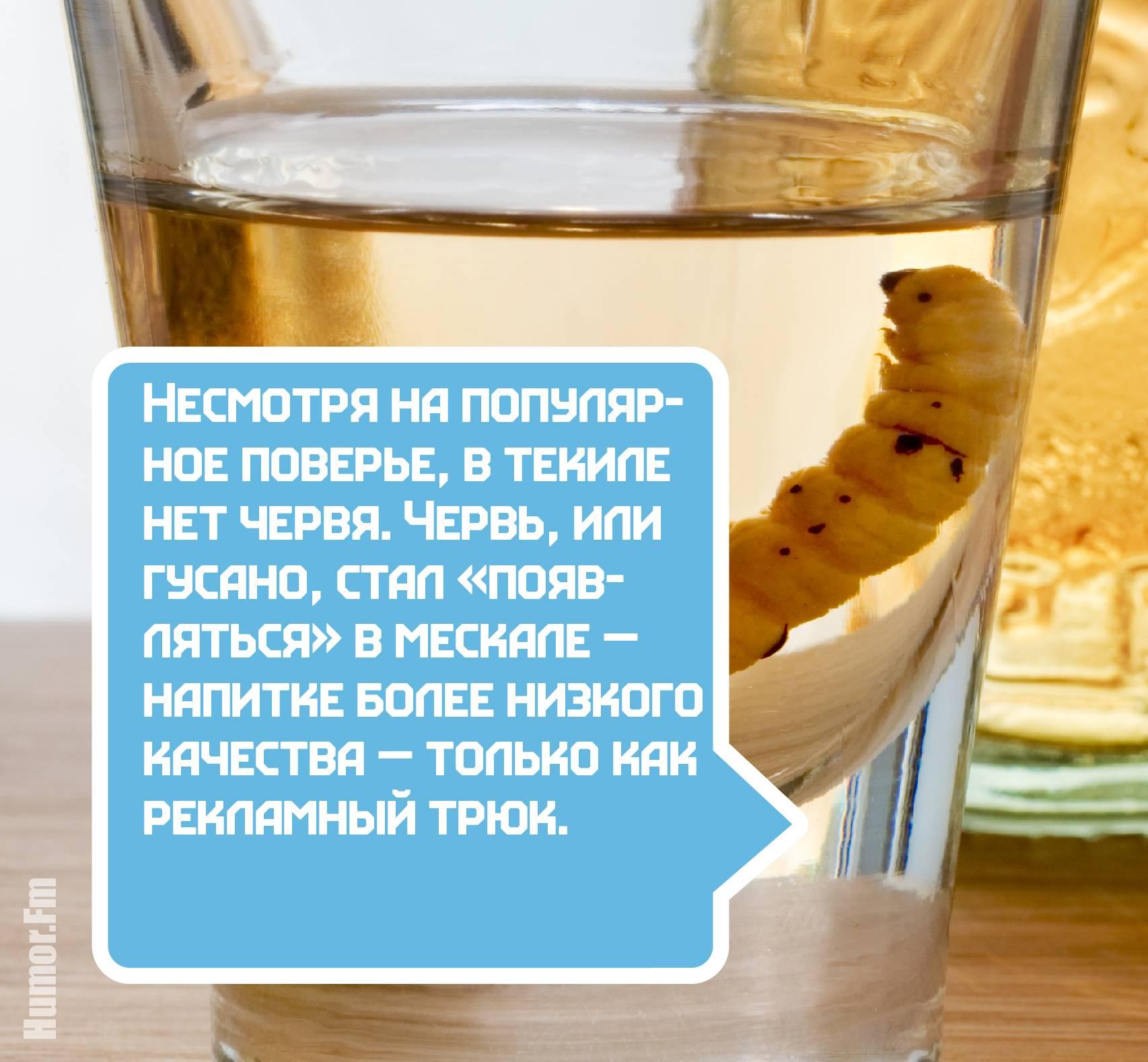 100 различныхфактов об алкоголе