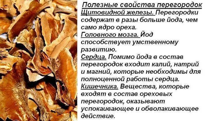 Перегородки грецких орехов: полезные свойства и вред, применение