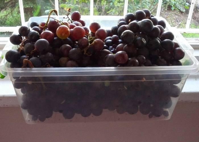 Как вырастить виноград и что из него можно сделать